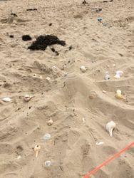 Beach Party 2017 (34)